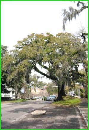 Take a Winter Getaway to Tallahassee, Florida