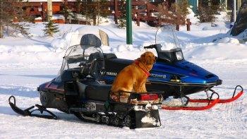 Man's best friend in Churchill, Manitoba.