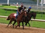 Thoroughbreds practicing for the Kentucky Derby at Churchill Downs racetrack.