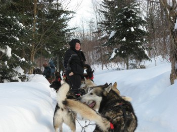 Dogsleds heading out on the path from Aventure Inukshuk at Duchesnay resort in Quebec.