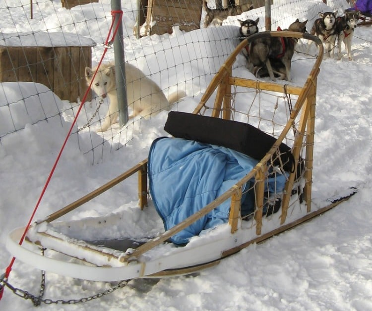 The basket for a passenger pulled by a team of dogs in dogsledding.