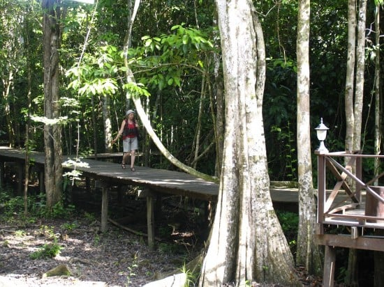Boardwalk into the jungle at Abai Jungle Lodge