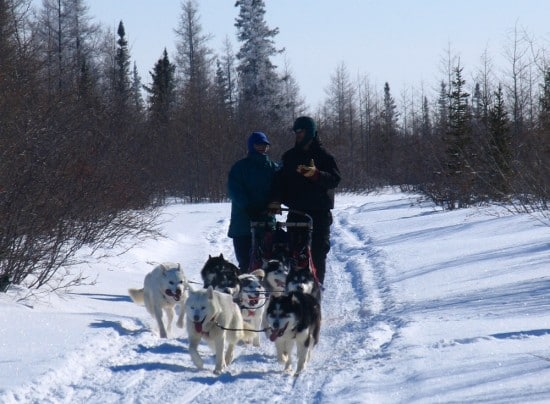 Dogsledding in Churchill, Manitoba.