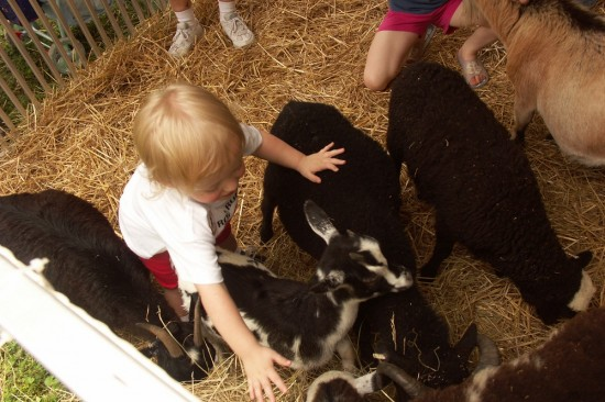 Petting Zoo at the Oak Ridge Secret City Festival.