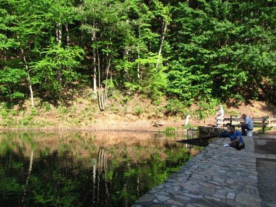 Amicalola Falls Reflecting Pool