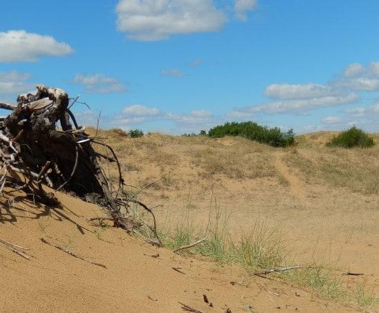 Sand dunes at Douglas Provincial Park.