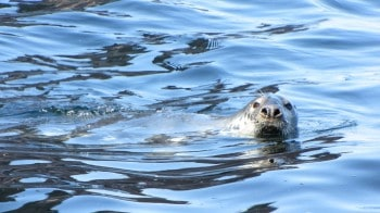 Seal on the water.