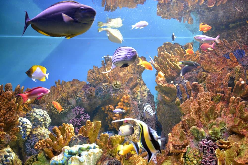Boston New England Aquarium