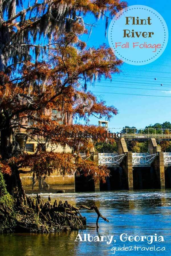 Fall foliage on the Flint River at Albany, Georgia.