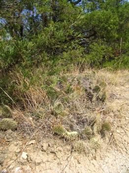 Cactus plants and wild flowers