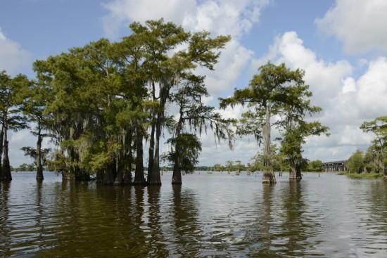 Atchafalaya Basin Landing And Swamp Tours