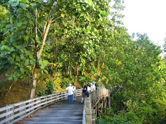 Boardwalk into the rainforest