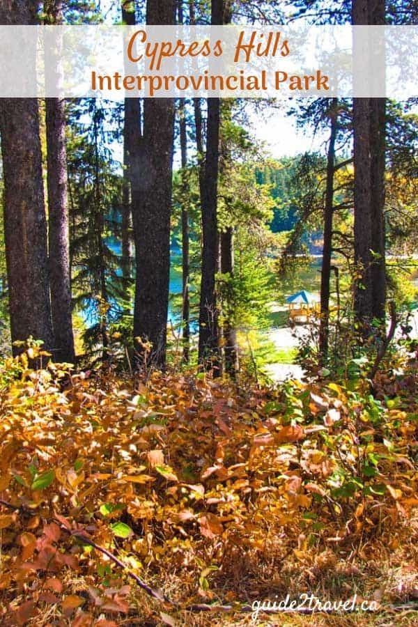 Fall in Cypress Hills Interprovincial Park - Saskatchewan & Alberta