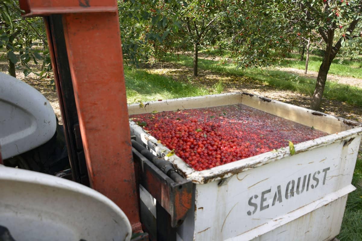 Seaquist Farm