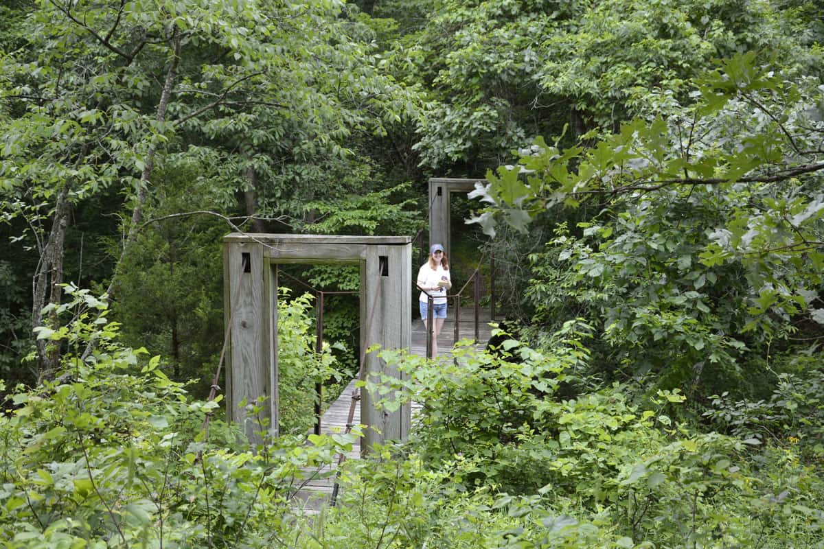 Coakley Hollow Trail swinging bridge.