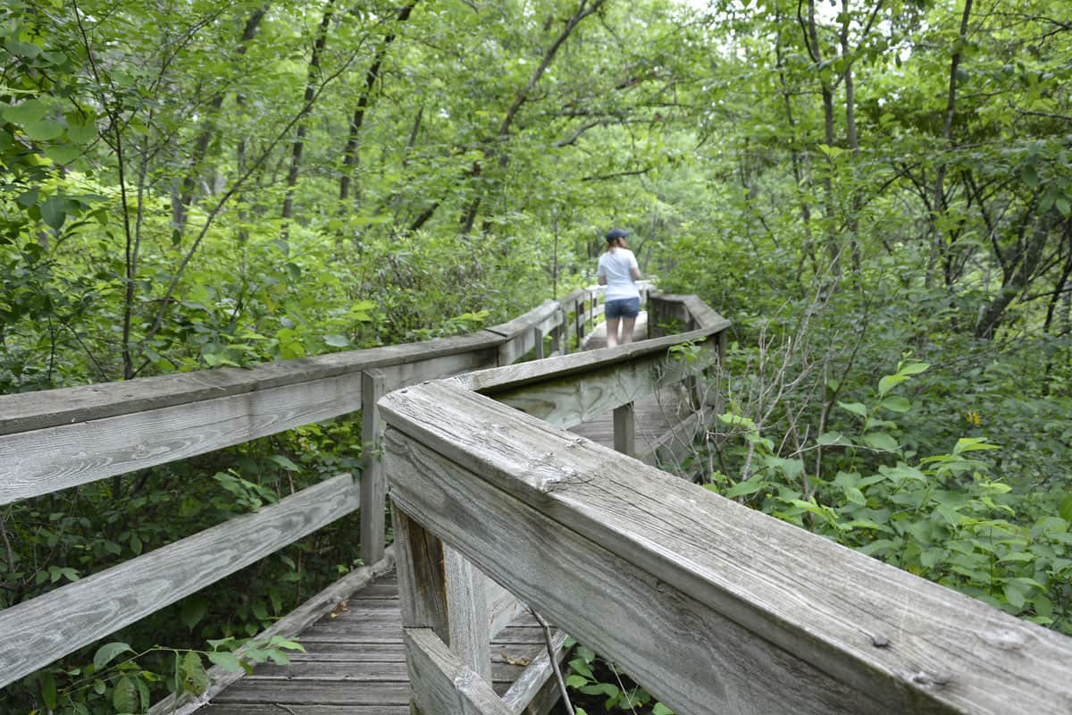 Coakley Hollow Trail boardwalk