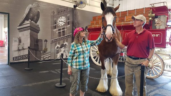 Linda Aksomitis with Budweiser Clydesdale