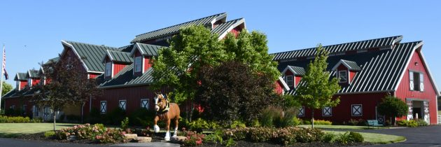 Budweiser Clydesdale Tradition: What Makes Warm Springs Ranch Special?