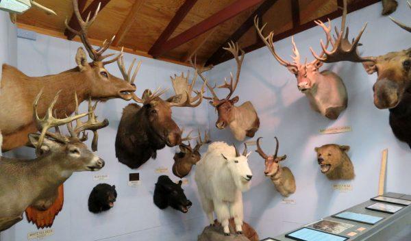 Mounted animals