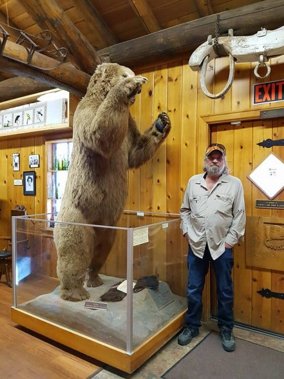 David Aksomitis with a 1200 pound Kodiak bear at the Beaverhead County Museum in Dillon, Montana.