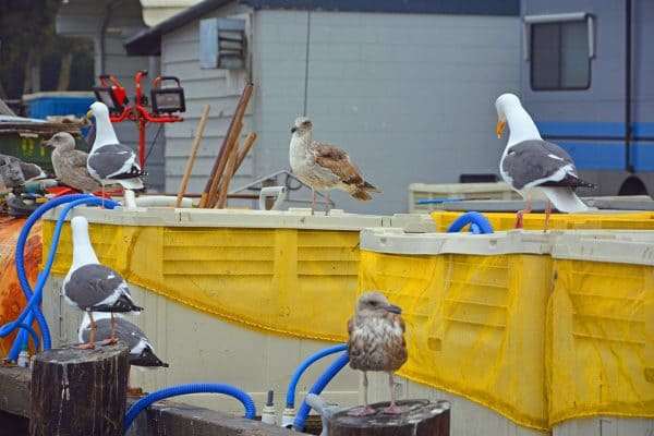Different species of birds on a boat in Morro Bay, California.