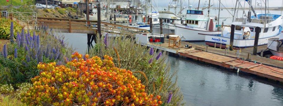 Explore the Fishing Village of Morro Bay on the California Coast