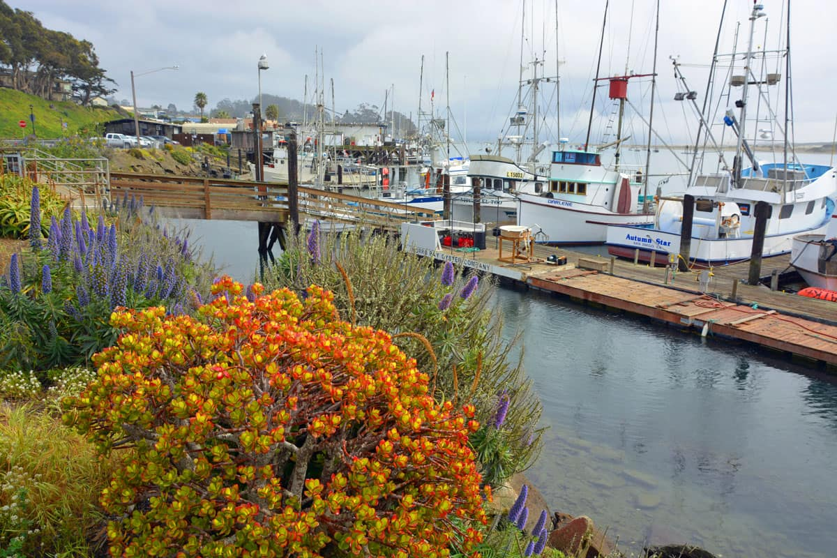 Boats in the marina along the shores of Morro Bay, California.