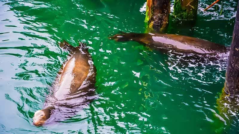 Sea lions on the dock at Morro Bay., California.
