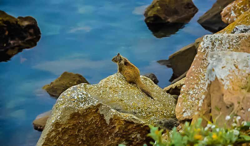Squirrel on the rocks along the shore at Morro Bay, California.
