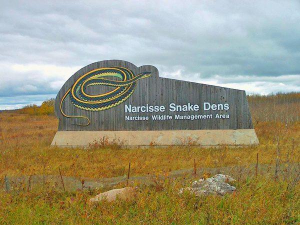Narcisse Snake Dens Wildlife Management area, north of Winnipeg, Manitoba.