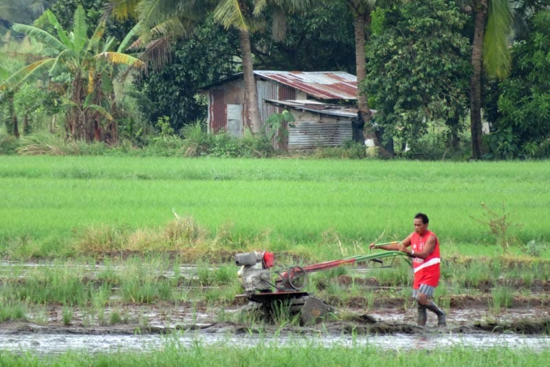 Large roto-tiller in a rice paddy.