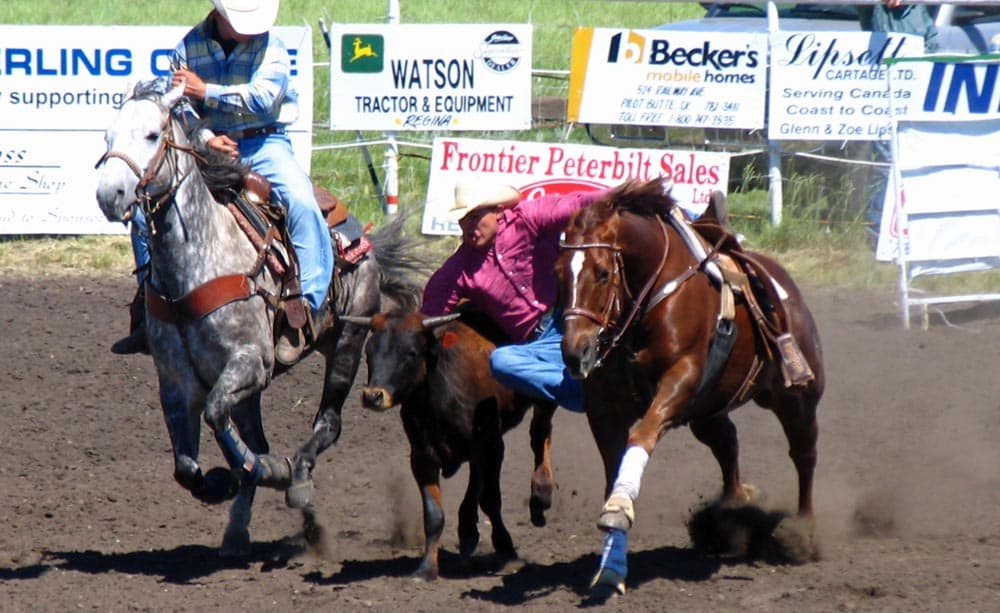 Steer wrestling at the Pilot Butte rodeo.