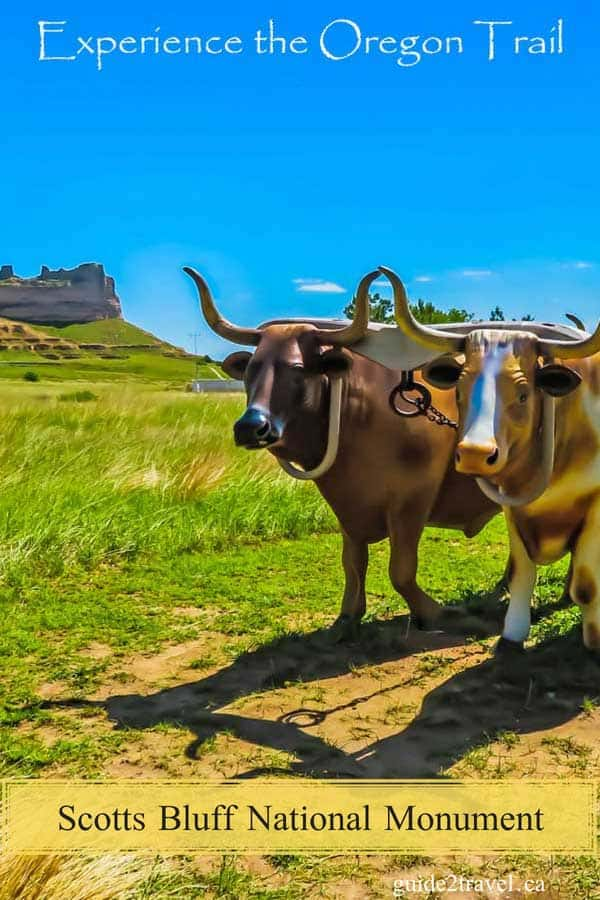 Models of oxen that took settlers across America on the Oregon Trail at Scotts Bluff, Nebraska.