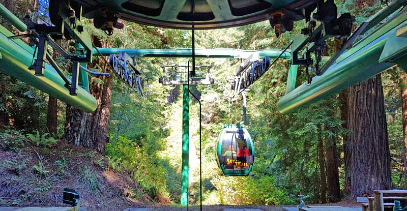 Sky Trail gondola ride takes you the top of the giant redwoods at Trees of Mystery.