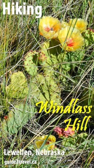 Cactus on Windlass Hill in Nebraska.