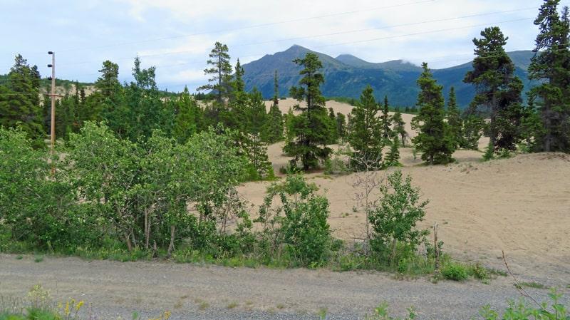 Carcross Desert in Yukon
