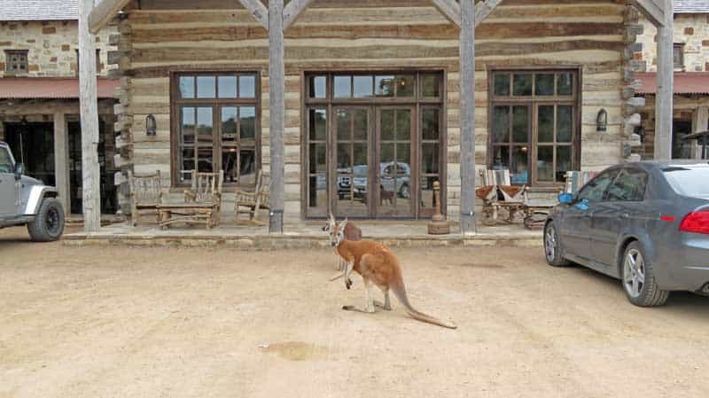Ox Ranch outside Ulvalde, Texas, has over 60 species of exotic animals.