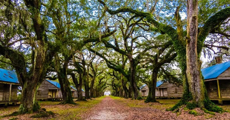 Double row of slave cabins with an alley of live oak trees.