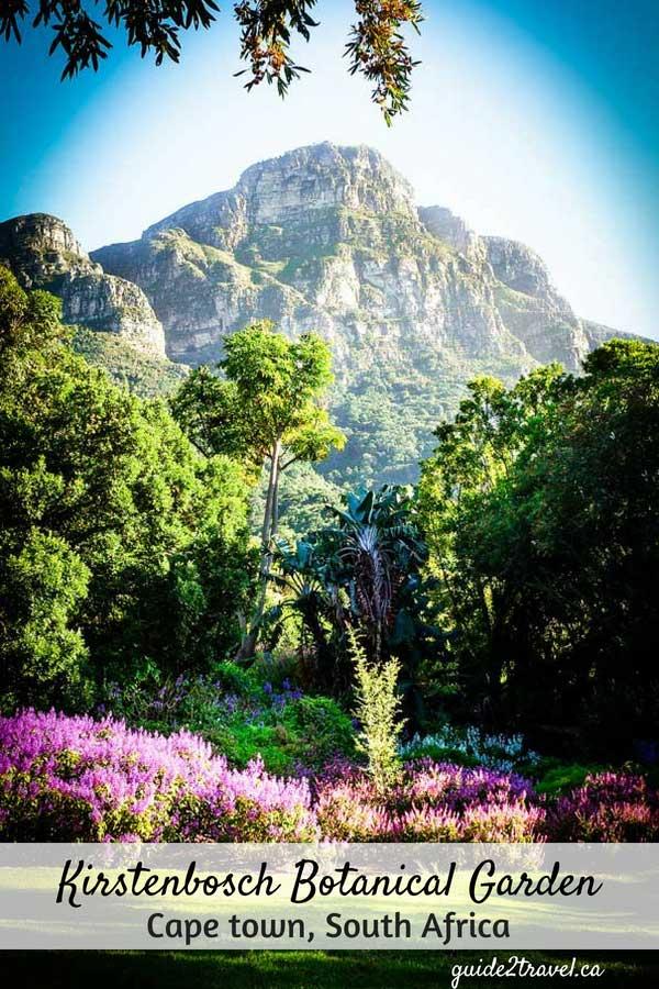 Kirstenbosch National Botanical Garden in Cape Town, South Africa.