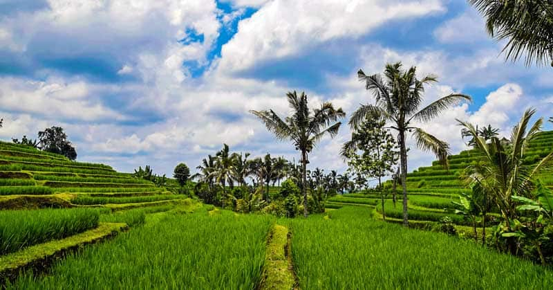 Bali, Indonesia, rice terraces. Reused from Pixabay with a CC0 license.