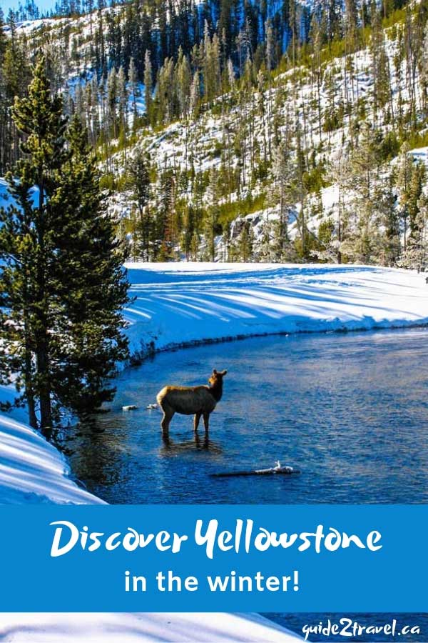 Discover all the beauty and wildlife of Yellowstone in the winter!