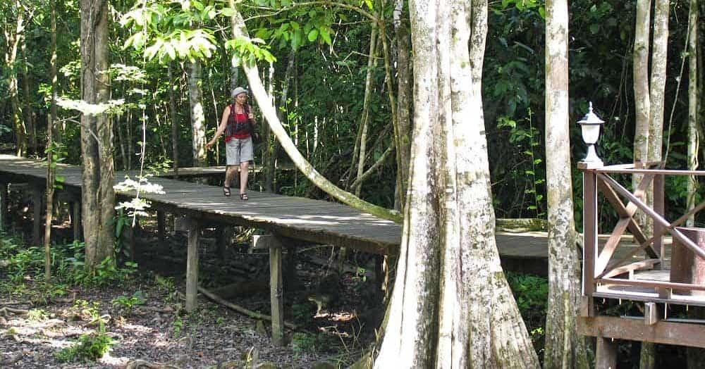 Boardwalk into the jungle at Abai Jungle Lodge