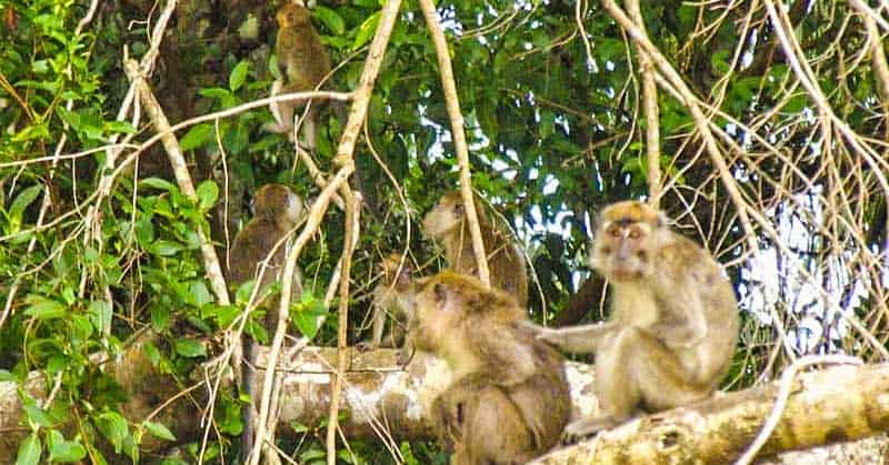 Monkeys in the jungle, as photographed from the boat ride on the river.