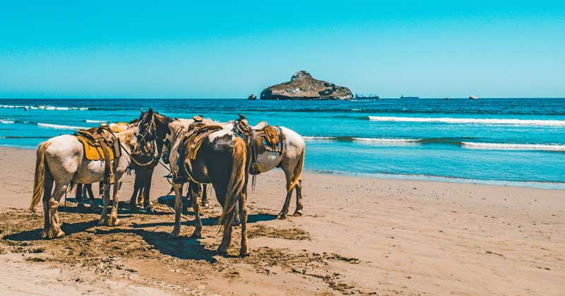 Horseback riding in Mazatlan. Photo by Daniel Apodaca on Unsplash
