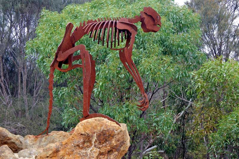 Giant short-faced kangaroo skeleton in Naracoorte Caves National Park.