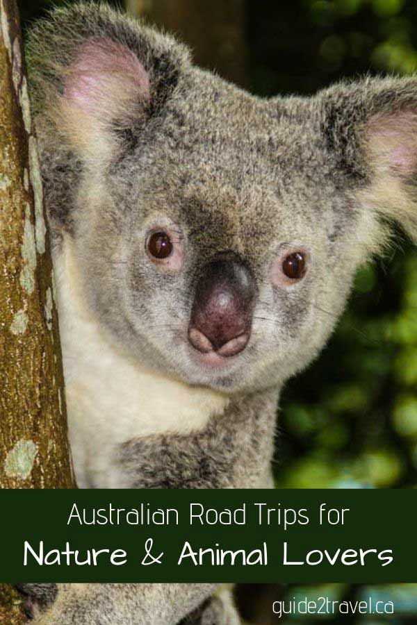 Check out these Australian road trips for nature and animal lovers.