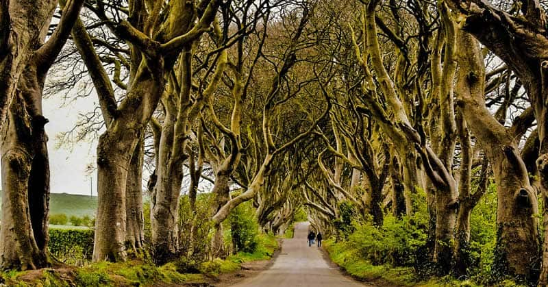 """The Dark Hedges"", Game of Thrones film location."