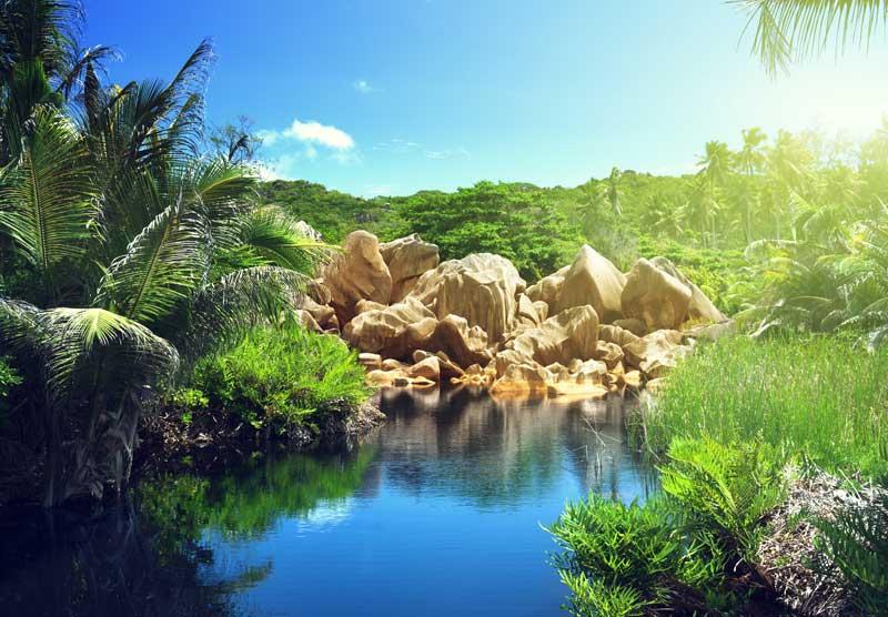 Lake in jungle of Seychelles, La Digue island beach vacation — Photo by Iakov