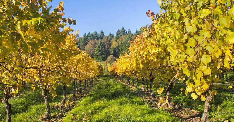 See many Oregon vineyards on your Oregon road trip.