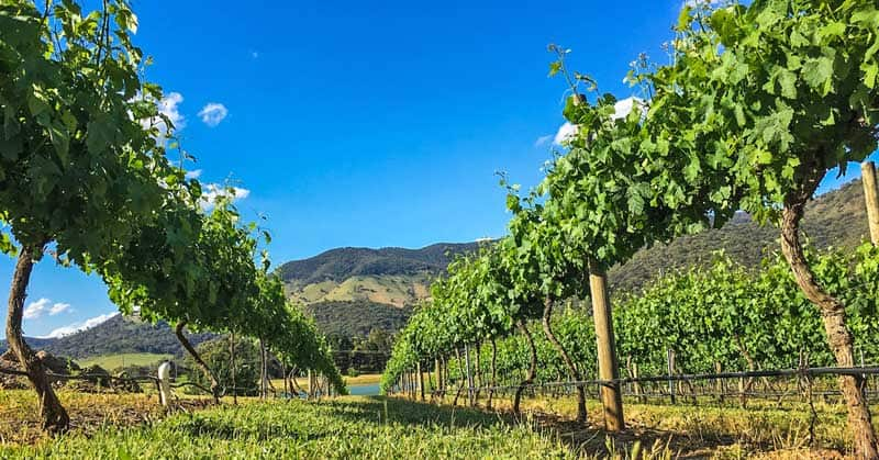 Top-Rated Wine Regions in Australia You Have to Visit
